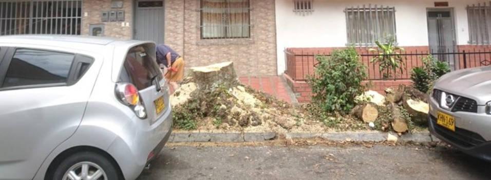 Por qué talaron este árbol en el barrio Obrero