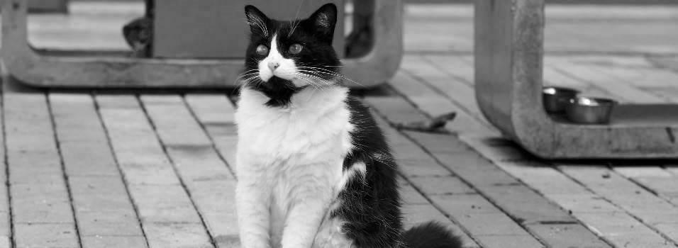 Adiós a Barbas, el gato consentido de Zúñiga