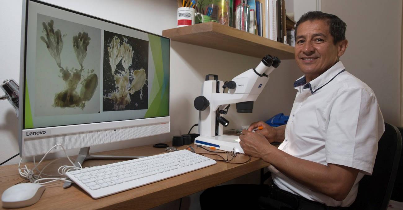 Gonzalo, el único paleontólogo de insectos en Colombia