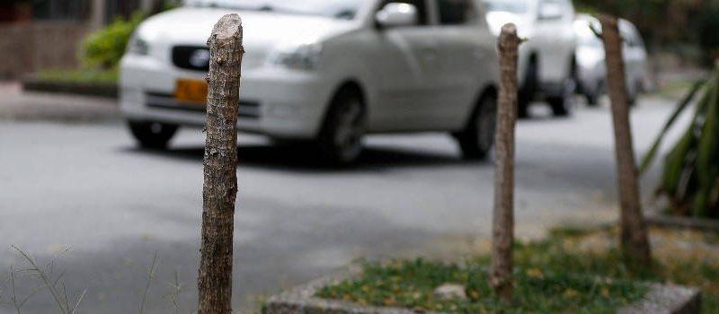 Indignación por tala de 4 árboles en Belén