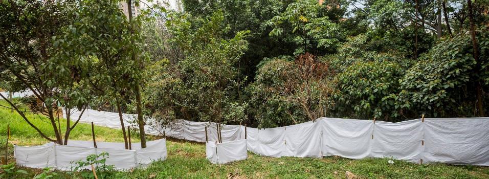 ¿Por qué talarán 139 árboles en El Poblado?