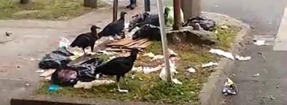 Mal manejo de basuras atrae gallinazos al Barrio Mesa