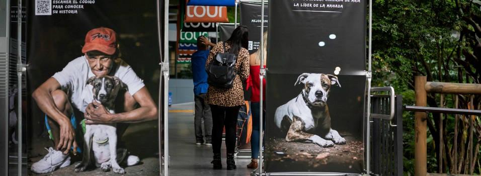 Historias de amor entre habitantes de calle de Medellín y sus mascotas