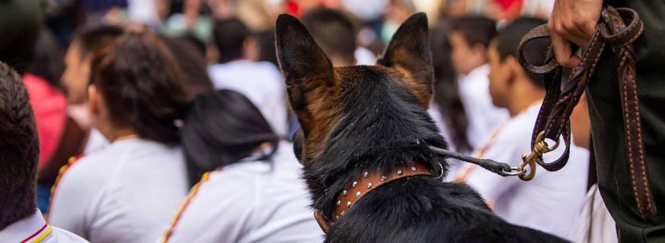 Cuánto vale la estrategia de perros antidrogas en los colegios de Envigado