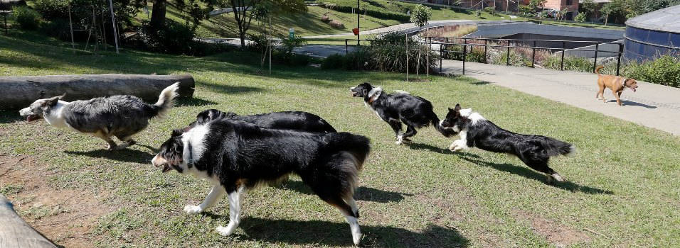 Piden más control a los perros en la Uva de El Poblado