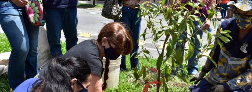 Reposición de árboles talados en Colombia con la 80, en Medellín