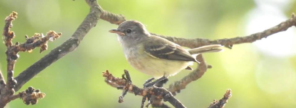 Nueva especie de ave fue avistada en el cerro Nutibara de MedellínNueva especie de ave fue avistada en el cerro Nutibara de Medellín